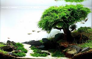 Тематический стиль, aquarium design