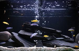 Стиль грот, aquarium design