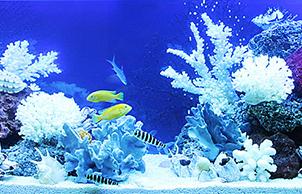 Стиль псевдоморе, aquarium design
