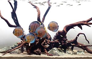 Стиль минимализм, aquarium design