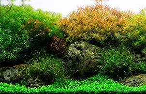Голландский стиль, aquarium design